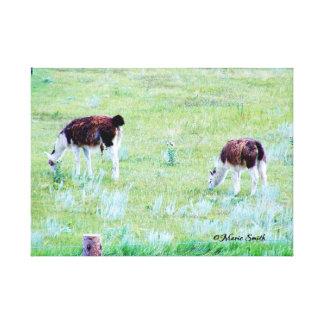 Llamas Grazing on a Warm Summer Day Canvas Print