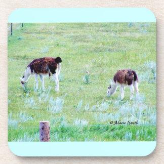 Llamas Grazing on a Warm Summer Day Coasters