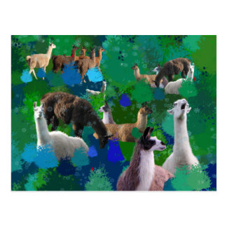 Llamas in a Llama-Forest with first snow Postcard