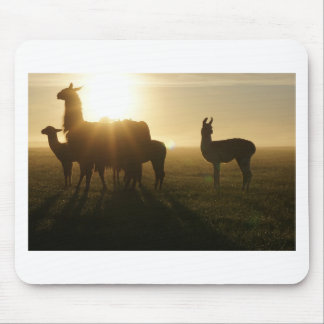 Llamas in the morning mouse pad