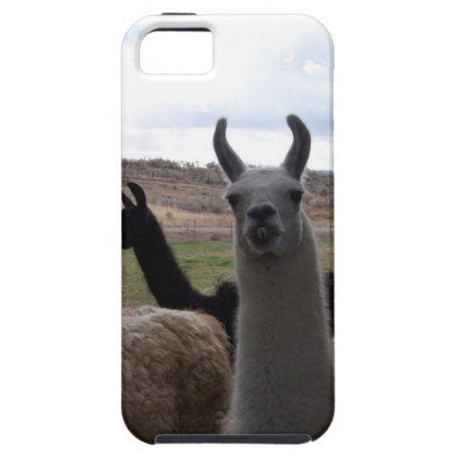 Llamas iPhone 5 Case-Mate Carcasas