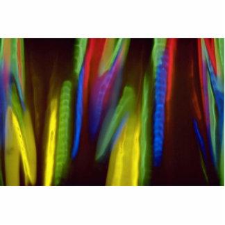 Llamas multicoloras esculturas fotograficas