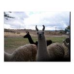 Llamas Postales
