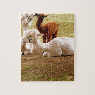 Llamas With Baby Cria Jigsaw Puzzle