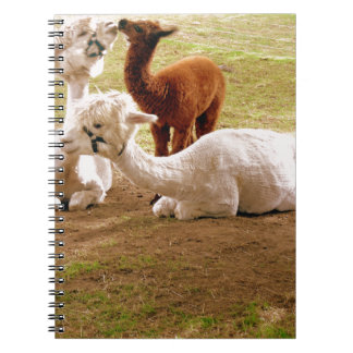 Llamas With Baby Cria Spiral Notebook