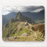 Llamas y una mirada excesiva de Machu Picchu, Tapete De Ratones