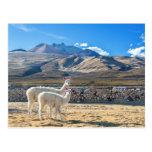 Llamitas en el Salar de Uyuni, Bolivia. Tarjetas Postales