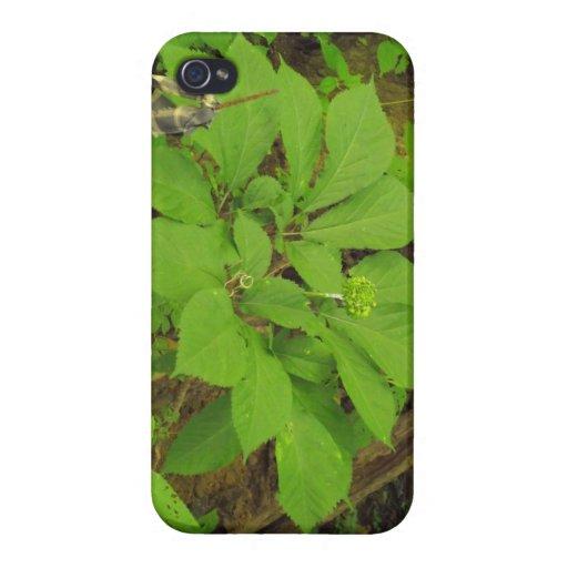 Llamo por teléfono al caso con la planta del Ginse iPhone 4 Carcasa