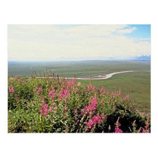 Llano costero tarjeta postal