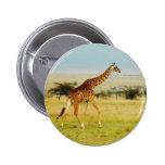 Llanos de Mara del Masai de la jirafa que caminan, Pins