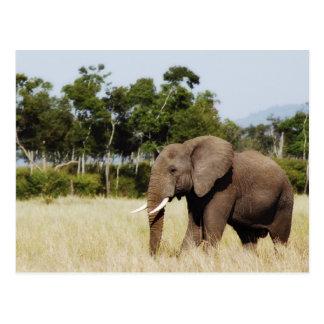 Llanos de Mara del Masai del elefante que caminan, Tarjeta Postal