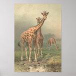 Llanos del africano de la impresión de la jirafa 1 poster
