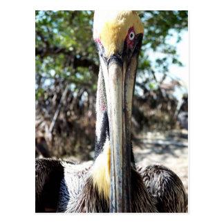 Llave del refugio de aves del pelícano largo, post