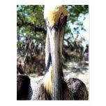 Llave del refugio de aves del pelícano largo, post tarjetas postales