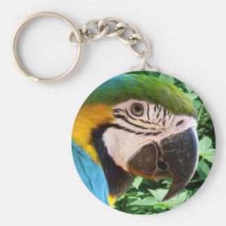 Llavero azul del loro del Macaw
