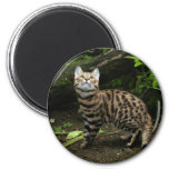 llavero con base negro del gato imán para frigorífico