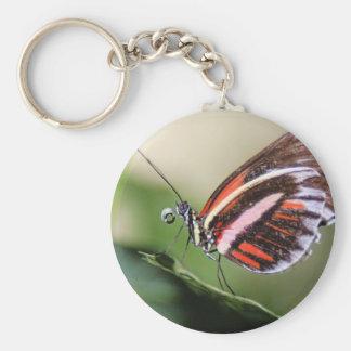 Llavero de la identificación de la mariposa