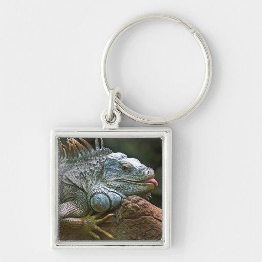 Llavero de la iguana