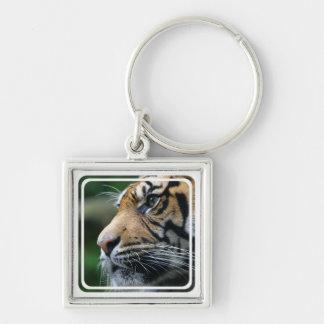 Llavero de la imagen del tigre