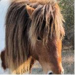 llavero del caballo escultura fotografica