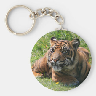 llavero del cachorro de tigre