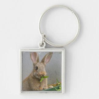 Llavero del conejo de conejo de rabo blanco