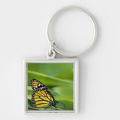 Llavero del diseño de la mariposa de monarca