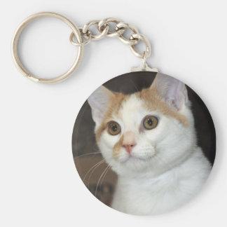 Llavero del gato del refugio de Shorthair del blan