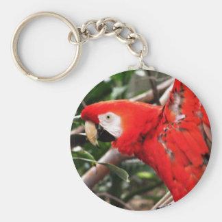 Llavero del Macaw