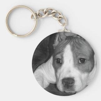 Llavero del perrito de Pitbull