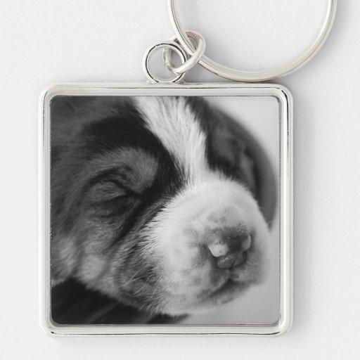 Llavero del perrito del Coonhound