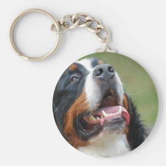 Llavero del perro de Berner Sennenhund