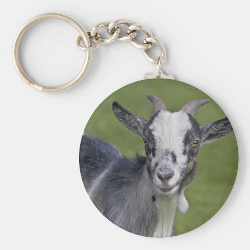 Llavero enano de la cabra