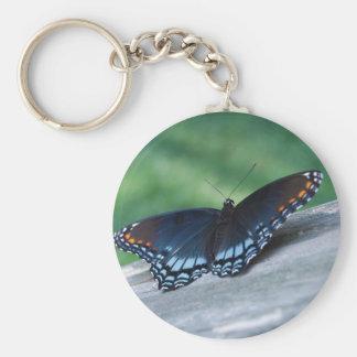 llavero púrpura Rojo-manchado de la mariposa