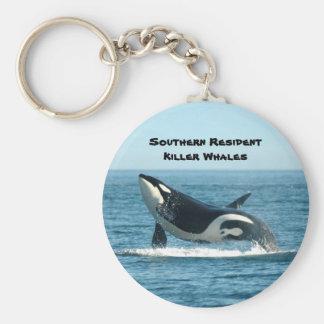 Llavero residente meridional de la orca