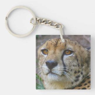 Llavero salvaje del guepardo