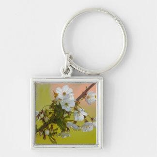 Llavero salvaje del premio de la flor de cerezo