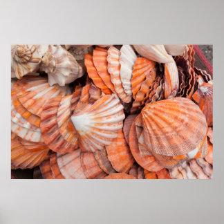 Llaves de la Florida, Key West, seashells Póster