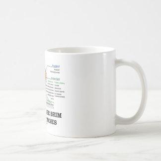 Llenado al borde de las hormonas (anatomía) tazas de café