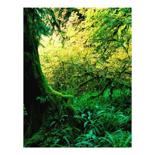 Lluvia de Hoh de los árboles olímpica Plantillas De Membrete