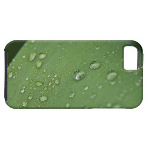 Lluvia de la mañana iPhone 5 fundas