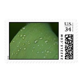 Lluvia de la mañana sello