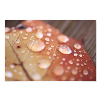 Lluvia de noviembre impresiones fotográficas