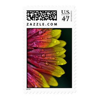 Lluvia del arco iris dramática sello