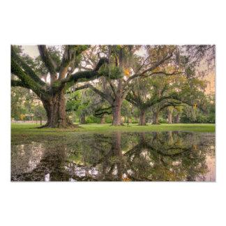 Lluvia del parque de Audubon Impresion Fotografica