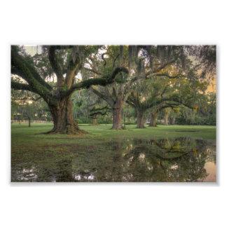 Lluvia del parque de Audubon Fotografías