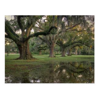 Lluvia del parque de Audubon Tarjeta Postal
