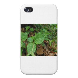 Lluvia iPhone 4 Protectores