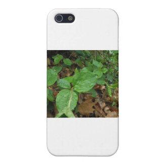 Lluvia iPhone 5 Protector