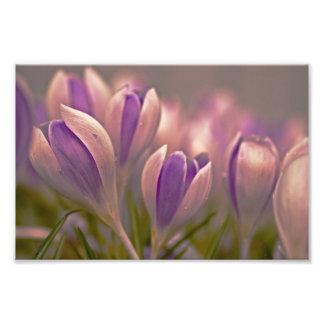Lluvia púrpura fotografía